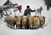 Winter and traditions in Romania