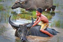 Vietnam / by Anke Metzger