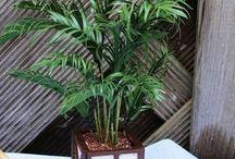 Miniatyyri kasvit
