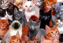 Le cats / The stuff i pin about cats