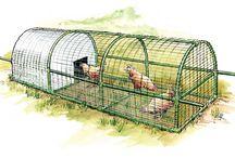 Cluck Cluck Chickens! / by Janene Imgrund
