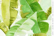 Foilage Watercolor / foliage watercolor