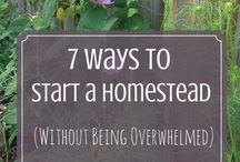 Starting Your Homestead