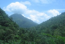Jamaica: The Blue Mountains / The Blue Mountains are the longest mountain range in Jamaica. They include the island's highest point, Blue Mountain Peak, at 2256 m (7402 ft).   It spreads in 4 parishes: Portland, St.Thomas, St Mary, St.AndrewPortland, St.Thomas, St Mary, St.Andrew