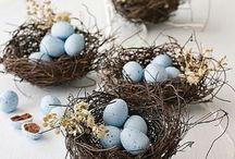 vogel-nestjes