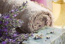 Lavender / by Kathy Walker