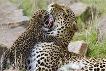 Wild Life / Wild Life amazing photos