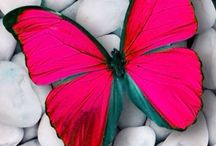 Beauty of butterfly