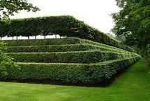 Hagen/Topiary