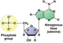 Chemie / Organicka chemie