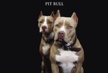 Pitbulls/Animals / by Chelsea Massel