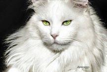 cat++