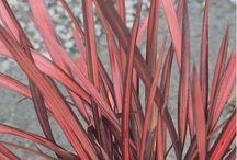 plantes grasses, agave , graminées et succulente etc..