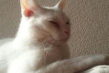 Frodo / mijn mooie kat