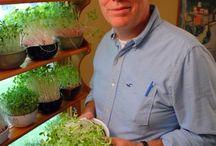 growing salad greens indoors