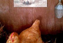 Chicken & Bunny Stuff / by Jodi Crawford