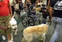 Dog Training,Rock of ages
