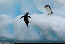 Happy Feet.. / by Jeannine Gushiken