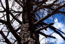 Trees / by Danielle Zipprick