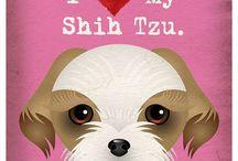 I ♡ my Shih Tzu