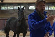 Paarden en coaching / Paarden en coaching