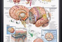 Neurology/Neurologie