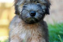 Pets/Animals / by Rachel Ricks