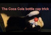 Anton The Cat