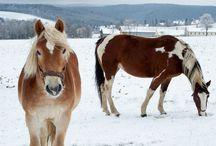 Salud del caballo / Conoce de forma más profunda cómo cuidar  a tu caballo y de qué enfermedades prevenirle.