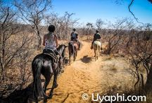 Riding in africa / Exhilarating horse-back riding safaris and horse riding safaris in Africa