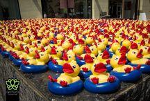 Duck Season 2017