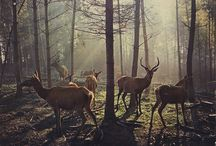 inspire : nature / Nature, the great outdoors and science