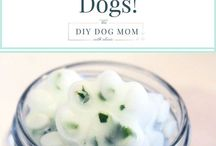 Tips and treats for dogs