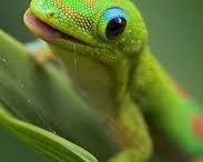 Geckos and Friends / Keeping it in the family.