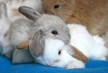 Bunny Love / Oh how I have always loved cute little bunnies! If I could I would have a bunch!! / by Lynn Dingle