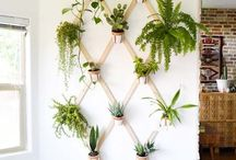 Houseplant display