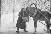 Animals in Finnish forces during war