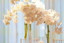 Wedding ideas / by Angelina Browne