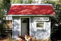 Chicken Coops / by Richard Tostenson