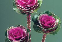 Cabbage Rose Cottage