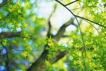 Beautiful Scenery / by Cheryl Carlson
