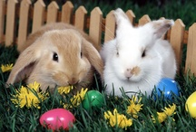Easter..Spring Time...Here Comes The Easter Bunny!! / by Margaret Darby