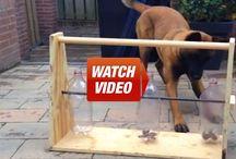 Entertainment for the Honey Dog!