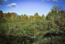 Fabius New York Land Auction, 2 acre property