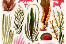 naturalist ilustration