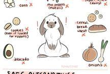 ideer til mine dyr