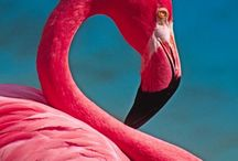 FLAMINGO HAPPY :) / by Debbie Lechko