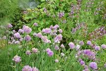 Nuestra huerta y Jardín / garden and organic gardening