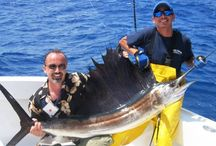 Miami Beach charter boat / The main aim of Miami charter give a great sport fishing trip.