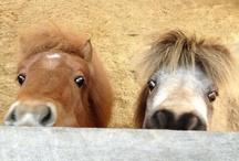 Amusing equine :D
